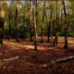 царство лісовика