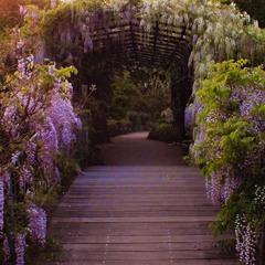 через фіолетовий місток в фіолетові сни ...