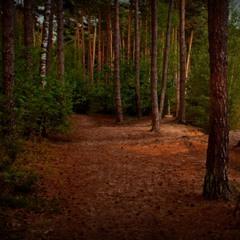 фарби вечірнього лісу ...
