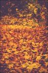 За окном художник рисует осень...