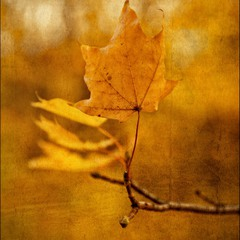Осенний лист:)