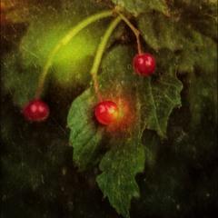 Я на ягодки гляжу...