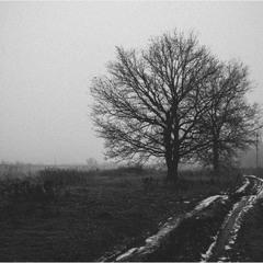 Сколько чудес за туманами кроется...