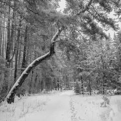 Хорошо в лесу зимой 2...