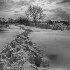 Следы на снегу...