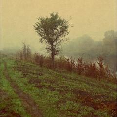 Осень,пейзаж,дерево у реки...