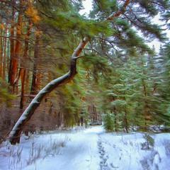 Хорошо в лесу зимой...