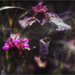 Космические цветы...