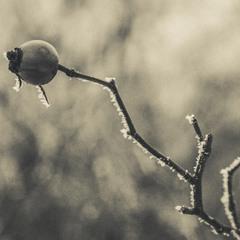 Окутаны инеем зимние дни 2:)