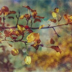 И снова осень…