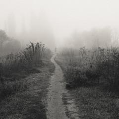 Утро -Туман 2:)