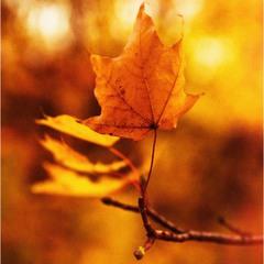Художница-осень!