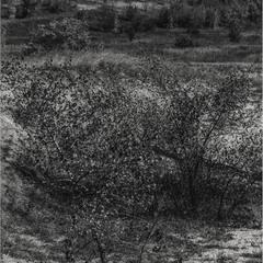 Чёрно-белый пейзаж)
