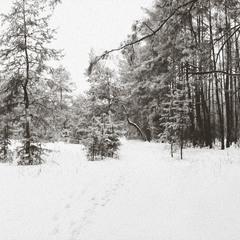 Зима-красавица)