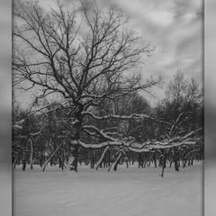 В Парке зимой:)