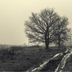 В туманной тишине...