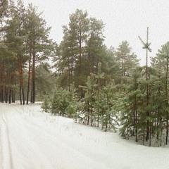 Январский лес!