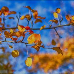Осень-Красавица!