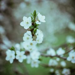Цветение природы