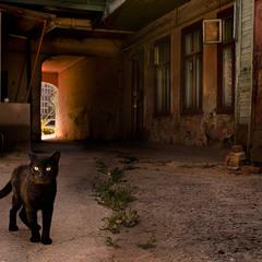 Коты и проходные дворы