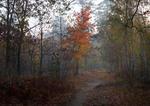 Облетают последние листья