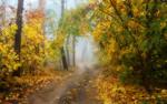 Как огненно клёны сияют в тумане