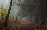 Туманные тропы