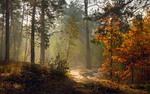 Прелестница- осень