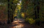 Чуть тронут желтизной сентябрьский лес