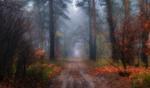 Сказочный ноябрь