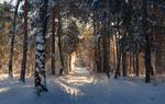 Как будто феи колдовали в заснеженном лесу