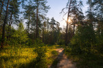 Летнее утро в лесу