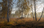 Луг проснулся, туманом окутанный
