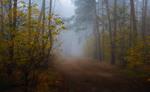 Туманный октябрь