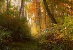 Солнечная осень. Октябрь