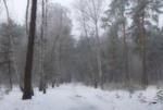 Туманный январь