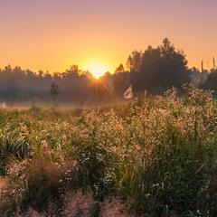 Шепчут травы на рассвете