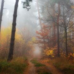 Туманная завеса октября