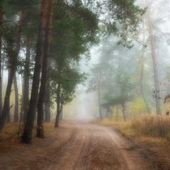 Окутан лес тумано октября