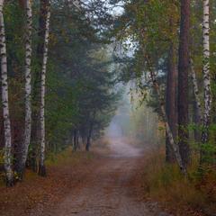 Осенние тропы лесные