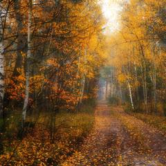 Рассыпая золото листвы