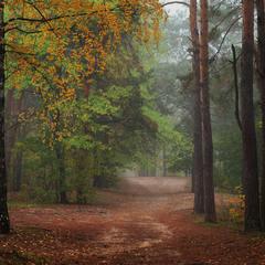 Тихо подкралась осень