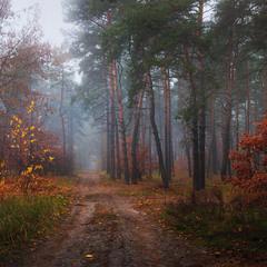 Горит пожар осенних листьев