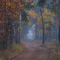 Грибной туман