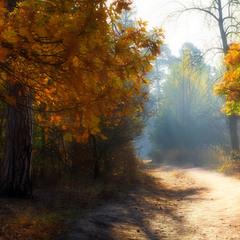 Пронизан солнцем лес насквозь