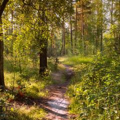 Коли у лісі затишно