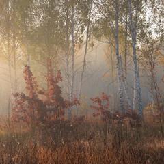 Туманное утро на лугу, октябрь