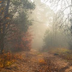 Туманны тропы солнечного ноября