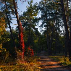 Утро в лесу. Октябрь
