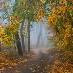 И в этом диком буйстве цвета стоит осенний лес густой